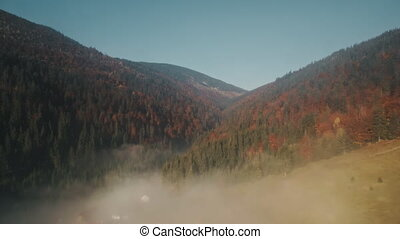 winding mist between hills with colored dense forests -...