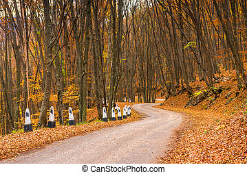 Winding mountain road in the autumn afternoon surrounded by forest