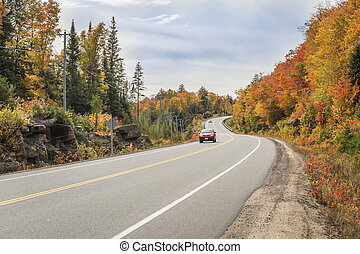 Winding Road Lined by Colorful Trees in Autumn