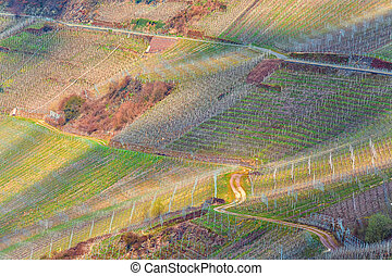 Winding road through vineyards