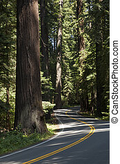 Winding road through the Redwoods, Humboldt Redwoods State Park, California, USA