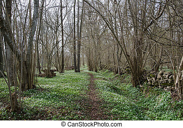 Winding springtime footpath