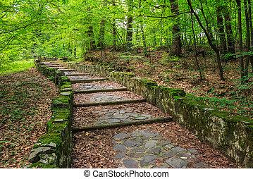 winding stone steps with foliage horizontal - winding path...