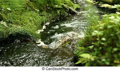 stream in lush green forest - winding stream in lush green...