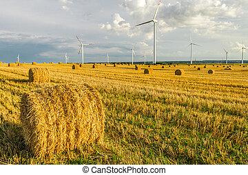 windmühle, auf, der, feld, in, sommer