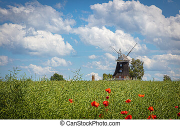 windmühle, blaues, altes , steht, canola, himmelsfeld,...