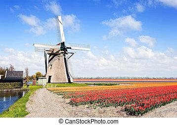 windmühle, und, blumenlandschaft