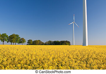 windmill farm in the rape field