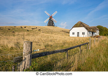 Windmill on the pasture