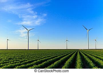 Windmills at field of crops - Windmills at sunset at a field...