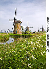 Windmills at Kinderdijk, the Netherlands in spring