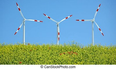 Windmills behind rape field - Three windmills rotating in...