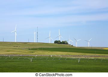 Windmills by farmland.