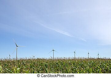 Windmills in a corn field
