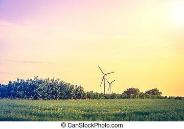 Windmills on a meadow