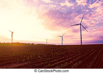Windmills on the field at sunset in summer.