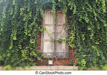 Window and brick wall with ivy tree