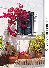 window and flowers in clay pots