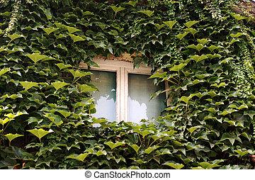window in rural house