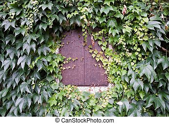 window shutter with ivy leaves