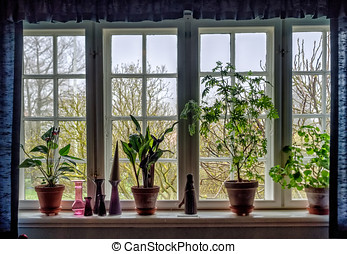 Window sill with flowers in pots