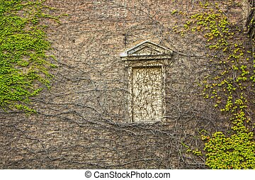 window surrounded by creeping ivy plants