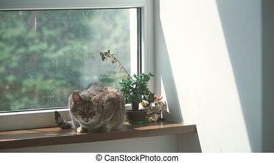 Window. The cat lies on the windowsill near the window