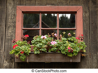 Window with floral arrangements