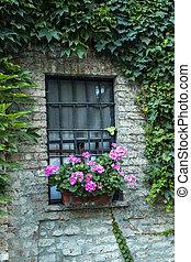 Window with flower. Window decorated with Geranium flowers.