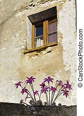 Window with flowers on the wall