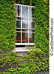 Window with green Ivy border