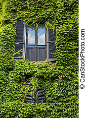 Window with ivy on wall in Italy