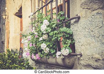 Window with large flowers of pelargonium