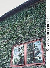 windows, árbol