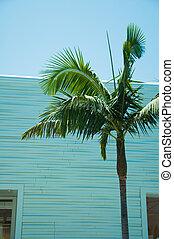 windows, fa, egy, pohár, pálma, irány, épülethomlokzat