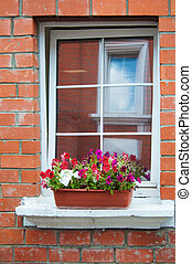 Windows with flowers in a flower box. Brick wall
