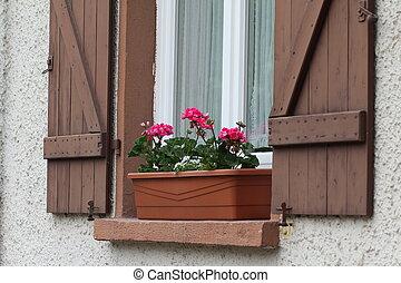 Geranium on the window sill