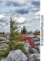 Windswept pine tree in rocky landscape - Pine tree battered ...