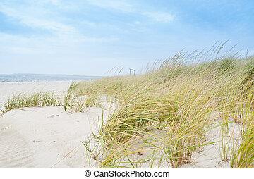 windswept, praia