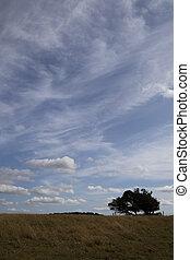windswept, stunted, árvore, mostrado silhueta