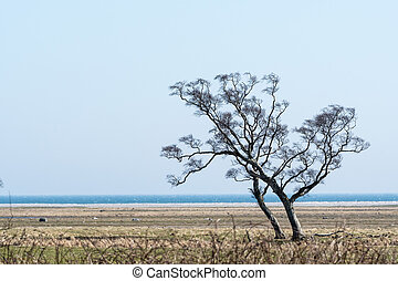Windswept tree by the coast