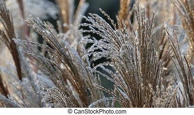 windy flower grass after rain - Windy flower grass after...