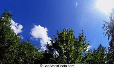 Windy sky with tree