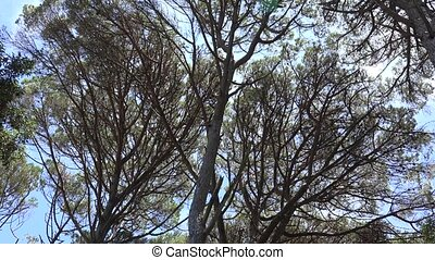 Windy Trees And Branches