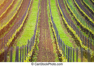 Wine agriculture background