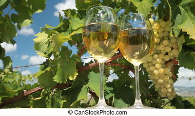 Wine and Grapes - Two glasses of white wine and bunch of...