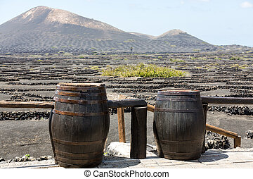 Wine barrels on background vines and mountains , Lanzarote; ...