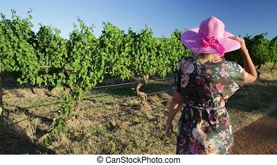 Wine farm woman - Vineyard winery grape picking in sunset...