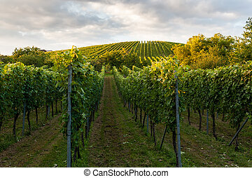 Wine fields in stuttgart germany
