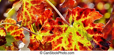 Wine grape leaf...